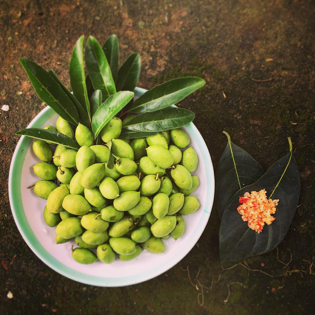 Ca na - a special fruit of the floating season in the West.  (Image source: louisscorpio)